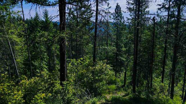 4450 TBD Buck Creek Rd, Loon Lake, WA 99148 (#202019605) :: Prime Real Estate Group