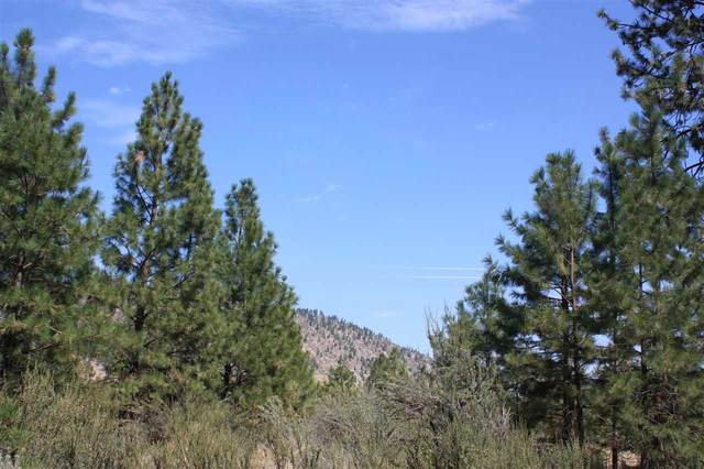39640 N Tree Ln, Lincoln, WA 99147 (#202024474) :: The Hardie Group