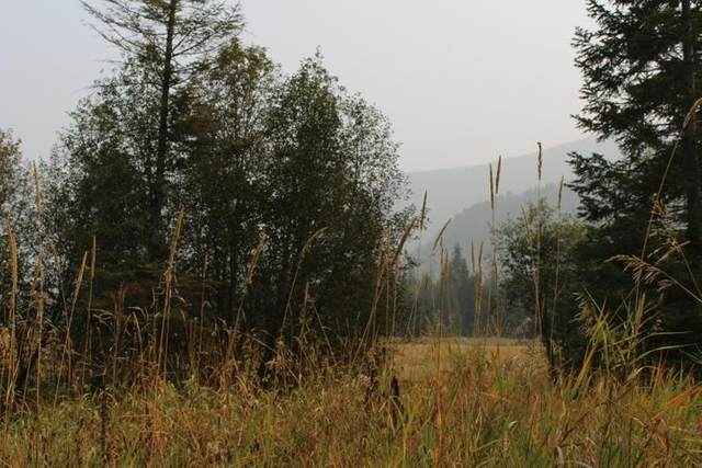 3661 TBD Deep Lake Boundary Lot 2 Rd, Colville, WA 99114 (#202113868) :: The Hardie Group