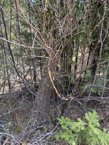 XXXXTBD E Deer Lake Rd, Loon Lake, WA 99148 (#202115218) :: Amazing Home Network