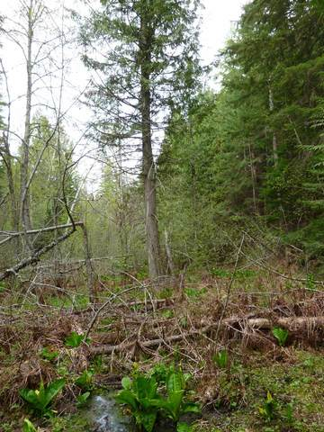 xxxxx E Blanchard Rd, Elk, WA 99009 (#202117130) :: Cudo Home Group