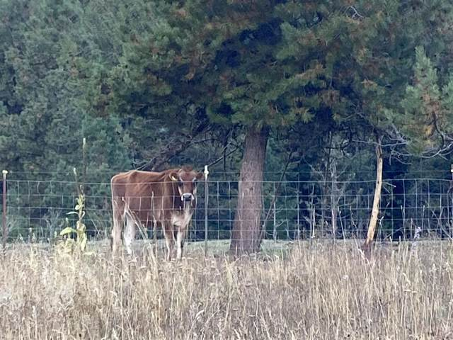 19879 Westside Calispell Rd, Cusick, WA 99119 (#202123153) :: The Spokane Home Guy Group