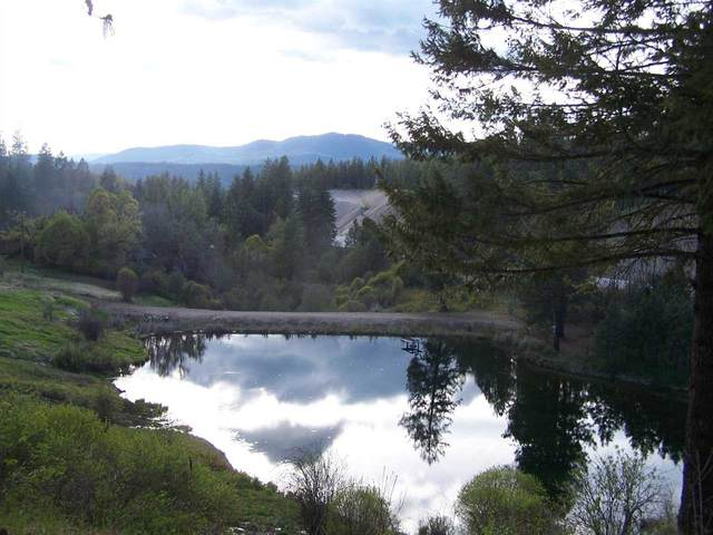 3199 Bulldog Creek Rd, Valley, WA 99181 (#202124359) :: The Spokane Home Guy Group