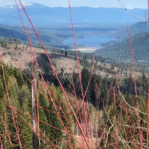 28600 N Mt. Spokane Park Dr #301, Mead, WA 99021 (#201914535) :: Northwest Professional Real Estate