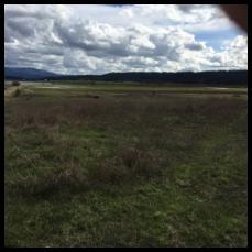 E Hauser Lake Rd, Newman Lk, WA 99025 (#201720274) :: The Hardie Group