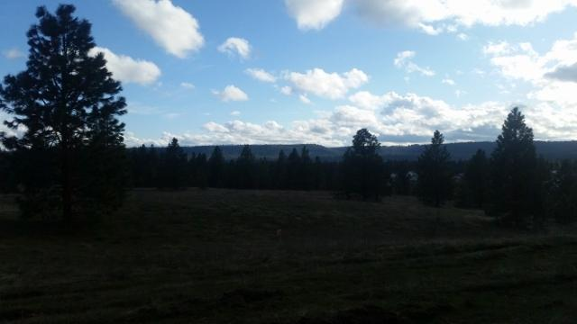 Lot 18 Westview Dr, Nine Mile Falls, WA 99026 (#201814802) :: The Synergy Group