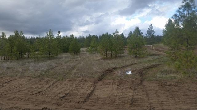 Lot 25 Westview Dr, Nine Mile Falls, WA 99026 (#201814814) :: The Synergy Group