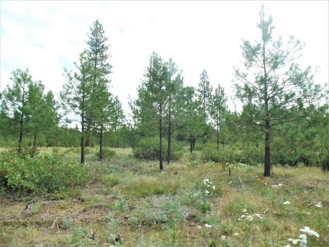 Lot 112 Old Kettle Rd, Kettle Falls, WA 99141 (#201920237) :: The Spokane Home Guy Group