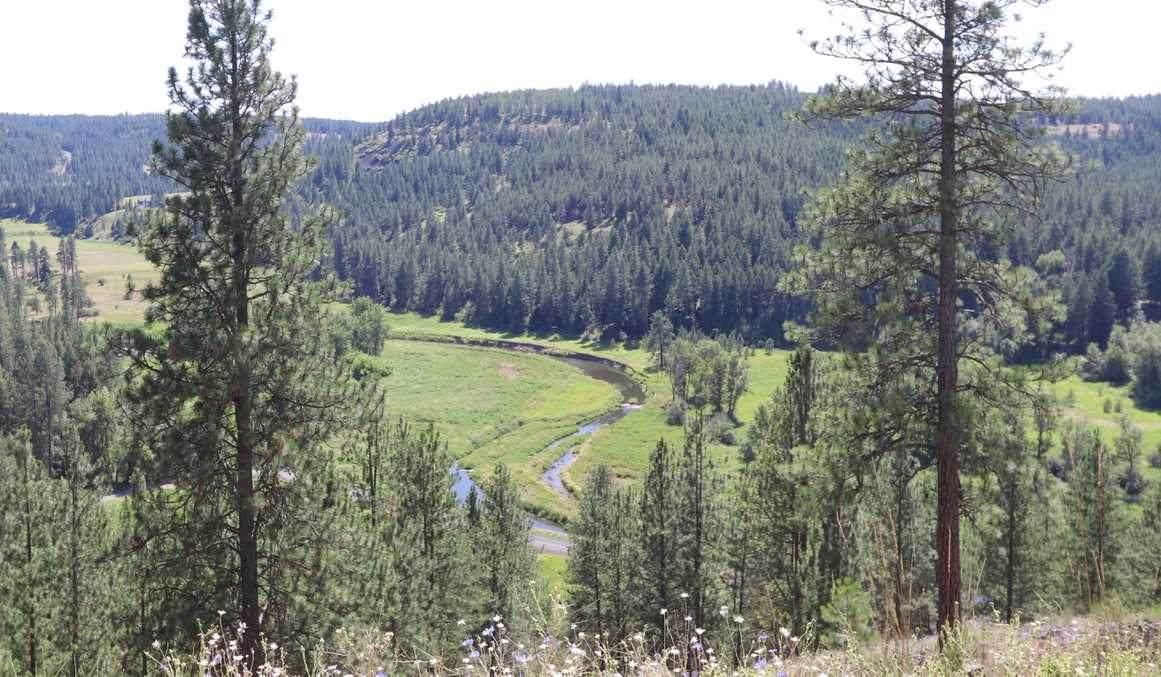 5025 Latah Ridge (Appx) Ln - Photo 1