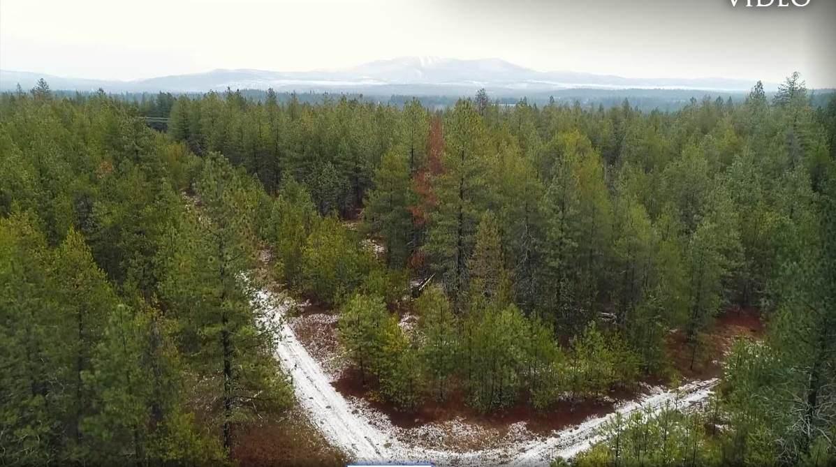 TBD Elk Bluff Ln - Photo 1