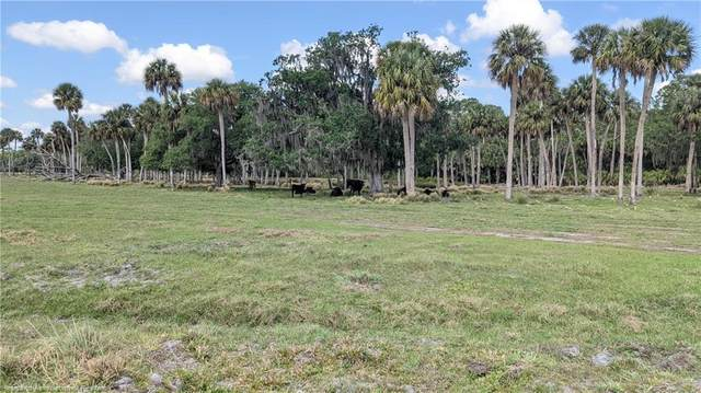 6655 W Josephine Road, Lake Placid, FL 33875 (MLS #279657) :: Compton Realty