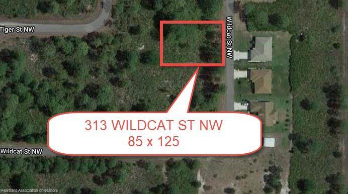 313 Wildcat Street - Photo 1