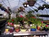 Florascape 20 Peters Ct - Photo 1