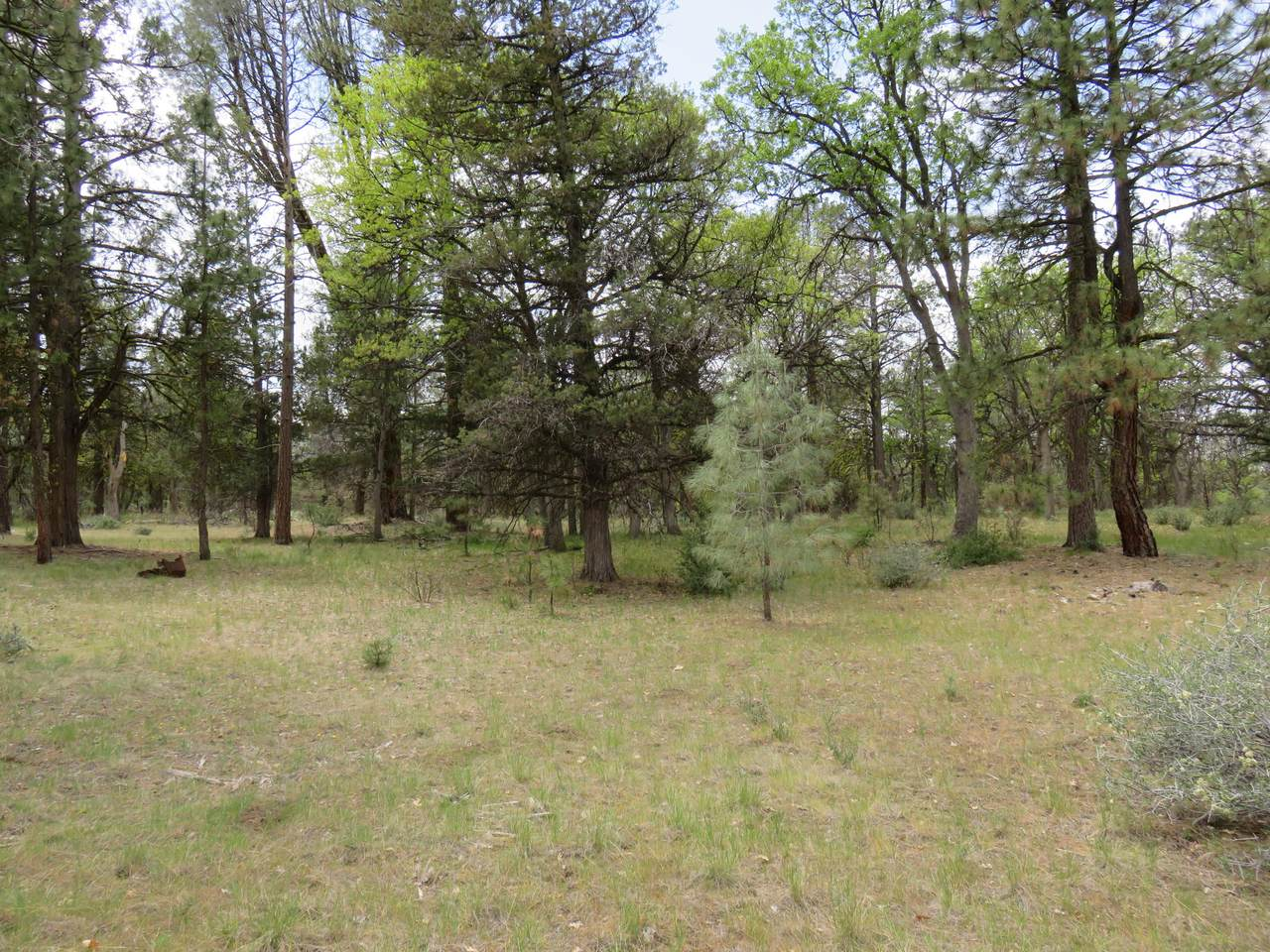 Lot 58 Shoshoni Loop - Photo 1