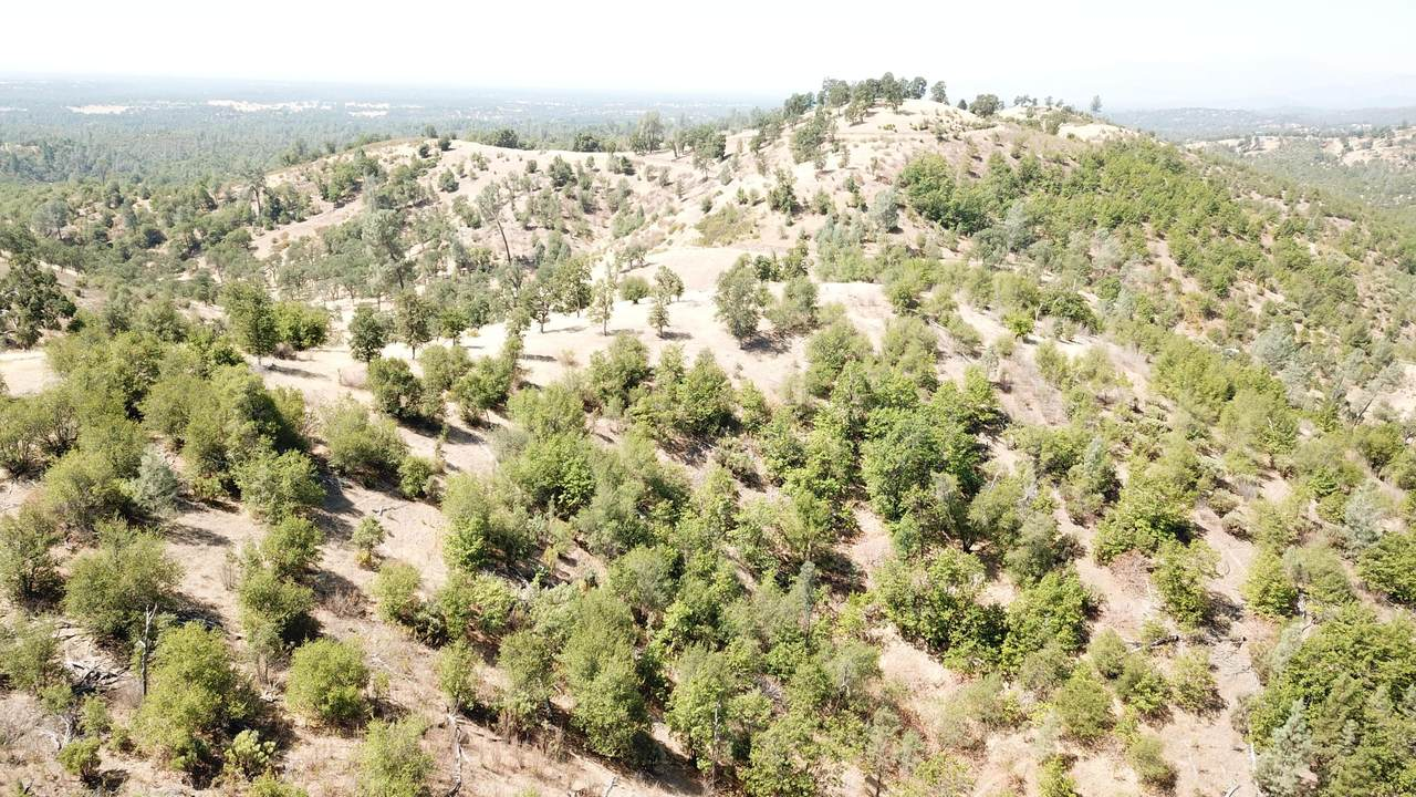 45 Acres Off Blue Sky Rd - Photo 1
