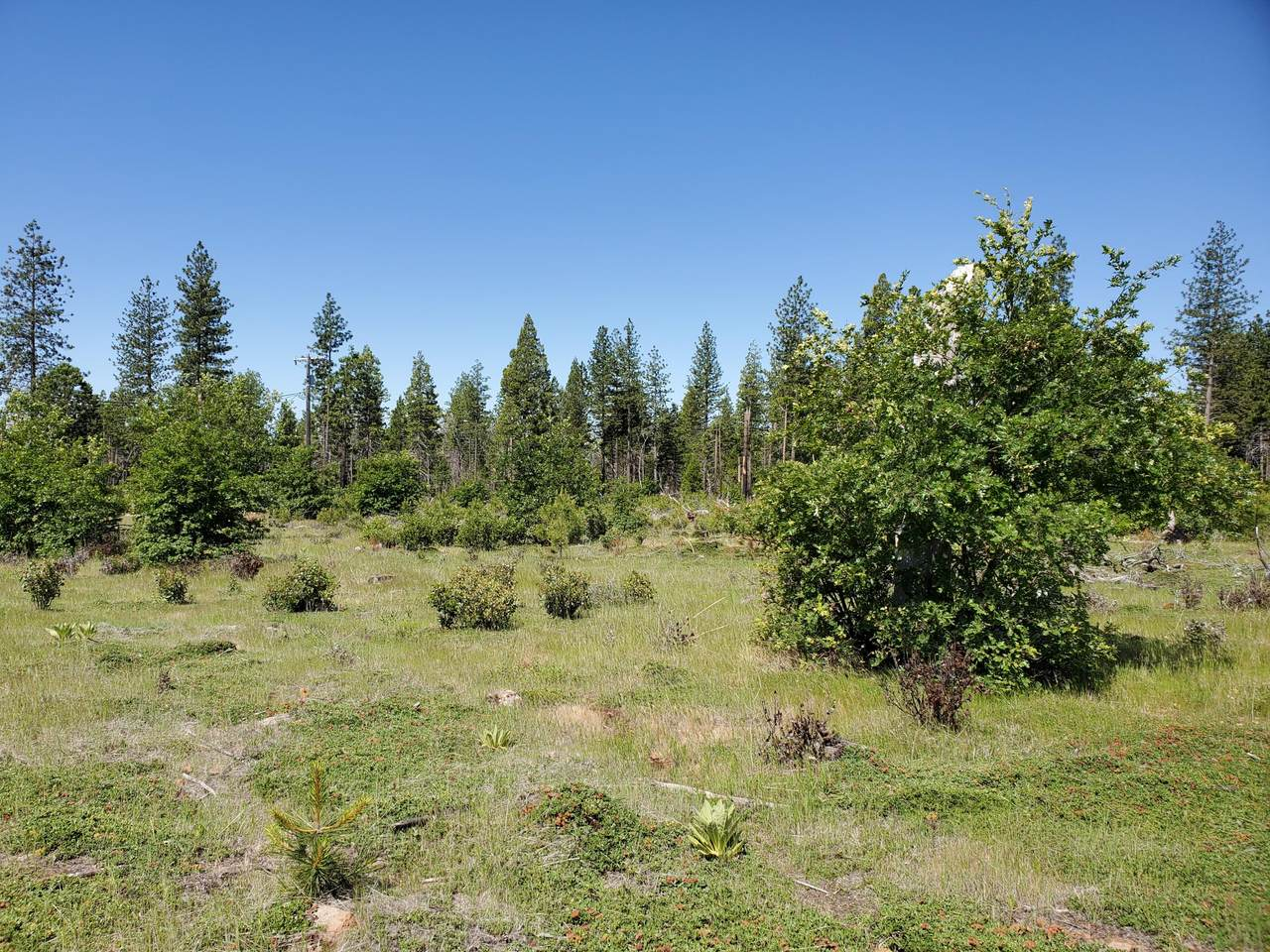 3 Acres Ponderosa Way - Photo 1