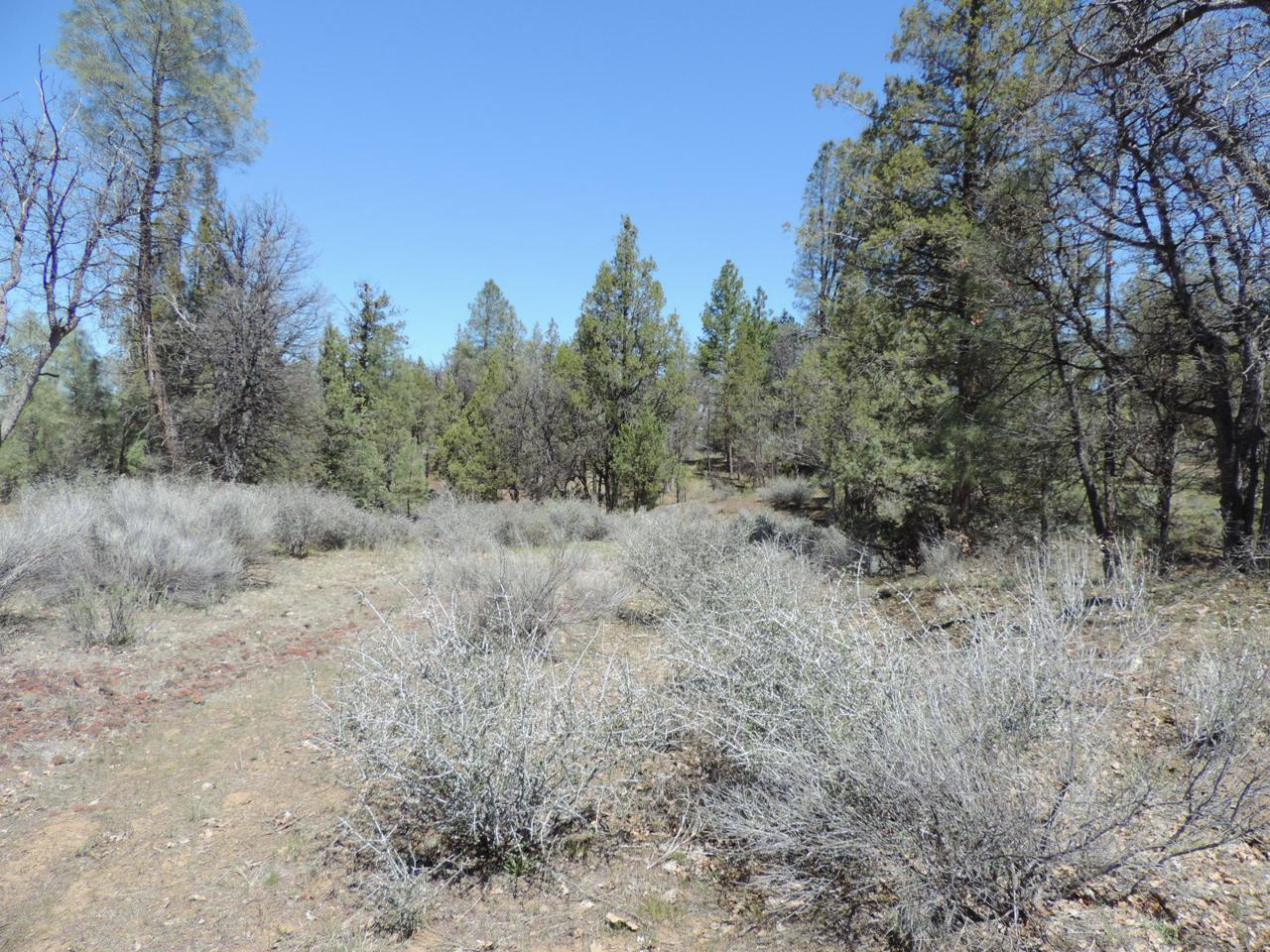 Lot 20 Shoshoni Loop - Photo 1