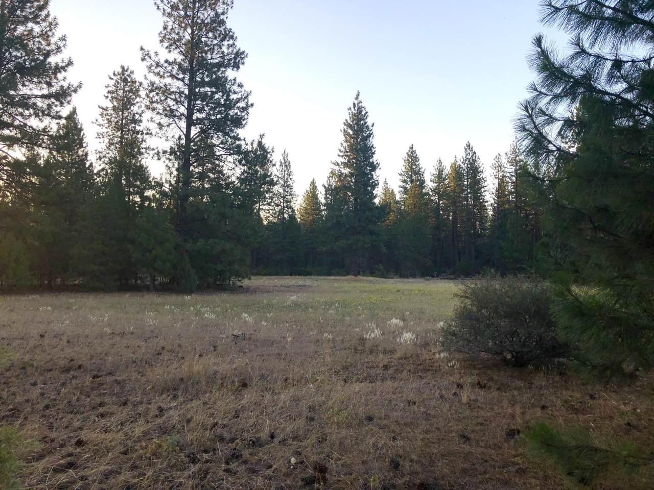 74.69 Acres Black Ranch Rd - Photo 1