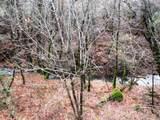 155 Acres Dickerson Rd - Photo 3