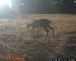 S Cow Creek Rd - Photo 20