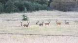 S Cow Creek Rd - Photo 37