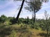 9 acres Jones Valley Trail - Photo 10