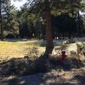 Spruce - Photo 8