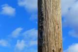 13509 Trinity Mountain Rd - Photo 11