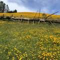 Jones Valley Trail - Photo 1