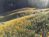 Jones Valley Trail - Photo 3