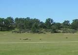 61 Acres Millville Plains Rd - Photo 11