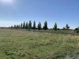 Lone Tree - Photo 8
