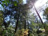 3.49 Acres Fawn Rd - Photo 1