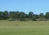 61 Acres Millville Plains Rd - Photo 12