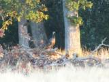 S Cow Creek Rd - Photo 69