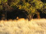S Cow Creek Rd - Photo 70