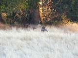 S Cow Creek Rd - Photo 71