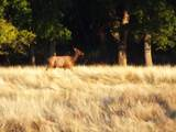 S Cow Creek Rd - Photo 72