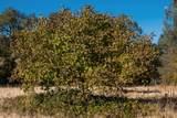 14021 Oak Run Rd - Photo 66