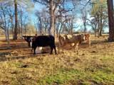 1864 acres Highway 36E - Photo 23