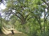 1864 acres Highway 36E - Photo 7