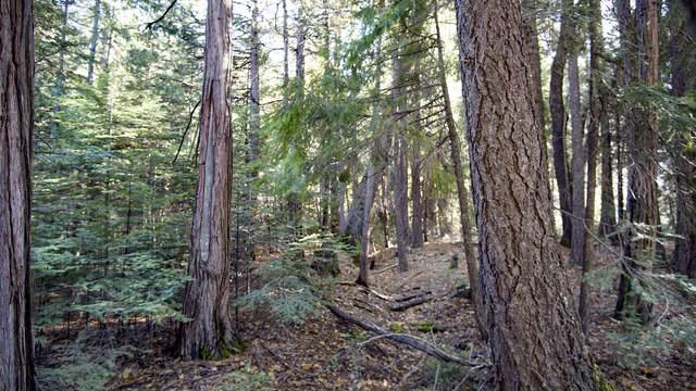 Emigrant Trail, Shingletown, CA 96088 (#20-5613) :: Waterman Real Estate