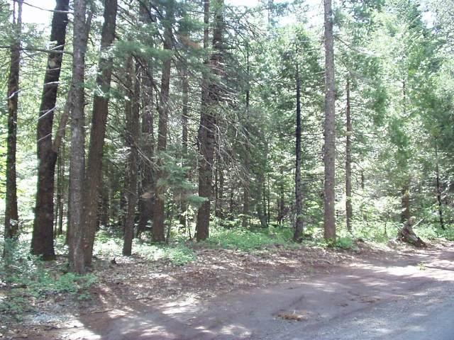 #22 Eastwood Way, Shingletown, CA 96088 (#21-2032) :: Coldwell Banker C&C Properties