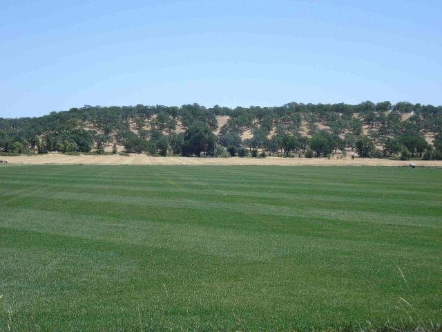 Vacant Lot Gover Rd, Anderson, CA 96007 (#19-1233) :: 530 Realty Group