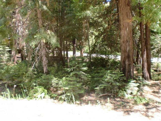 Mountains Meadow, Shingletown, CA 96088 (#19-3608) :: The Doug Juenke Home Selling Team
