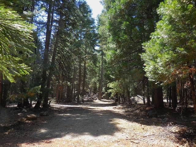 Lot 61 Pony Express, Shingletown, CA 96088 (#20-2735) :: Waterman Real Estate