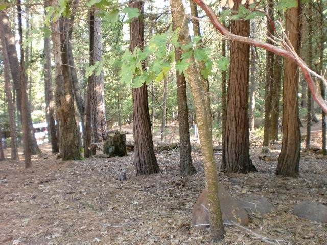 Lot 48 Bambi, Shingletown, CA 96088 (#20-311) :: Wise House Realty