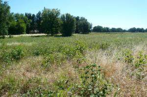 Rupert Road 3.33 Acres, Anderson, CA 96007 (#20-965) :: Josh Barker Real Estate Advisors