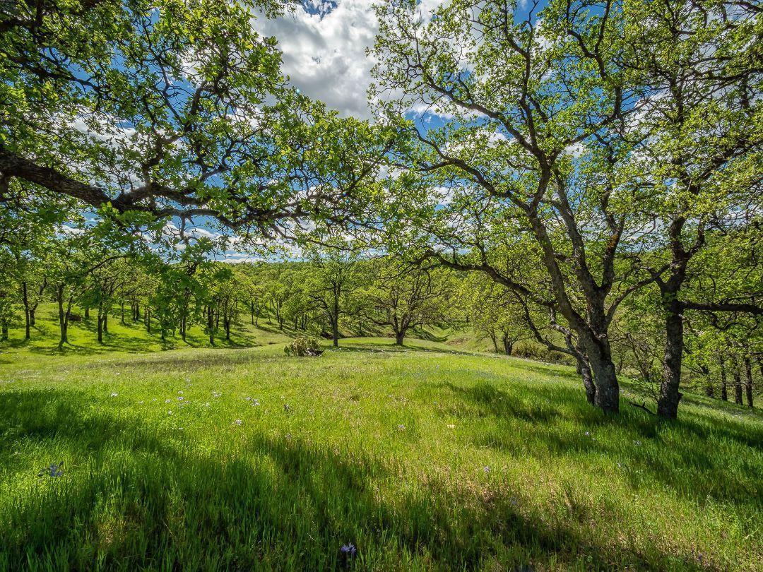 Rolling Oaks Lot 33 - Photo 1