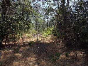 Lot 1, Silver King Road, Redding, CA 96001 (#19-5125) :: Coldwell Banker C&C Properties